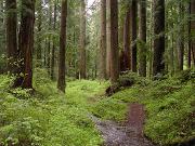 Лес США пеллеты