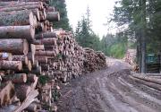 Excessive Logging-Preobseћnja seиnja