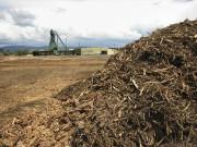 drevesnaya-biomassa