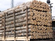 Wood Resources International