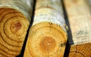 mirovoe-proizvodstvo-drevesnoy-produkcii-vyroslo